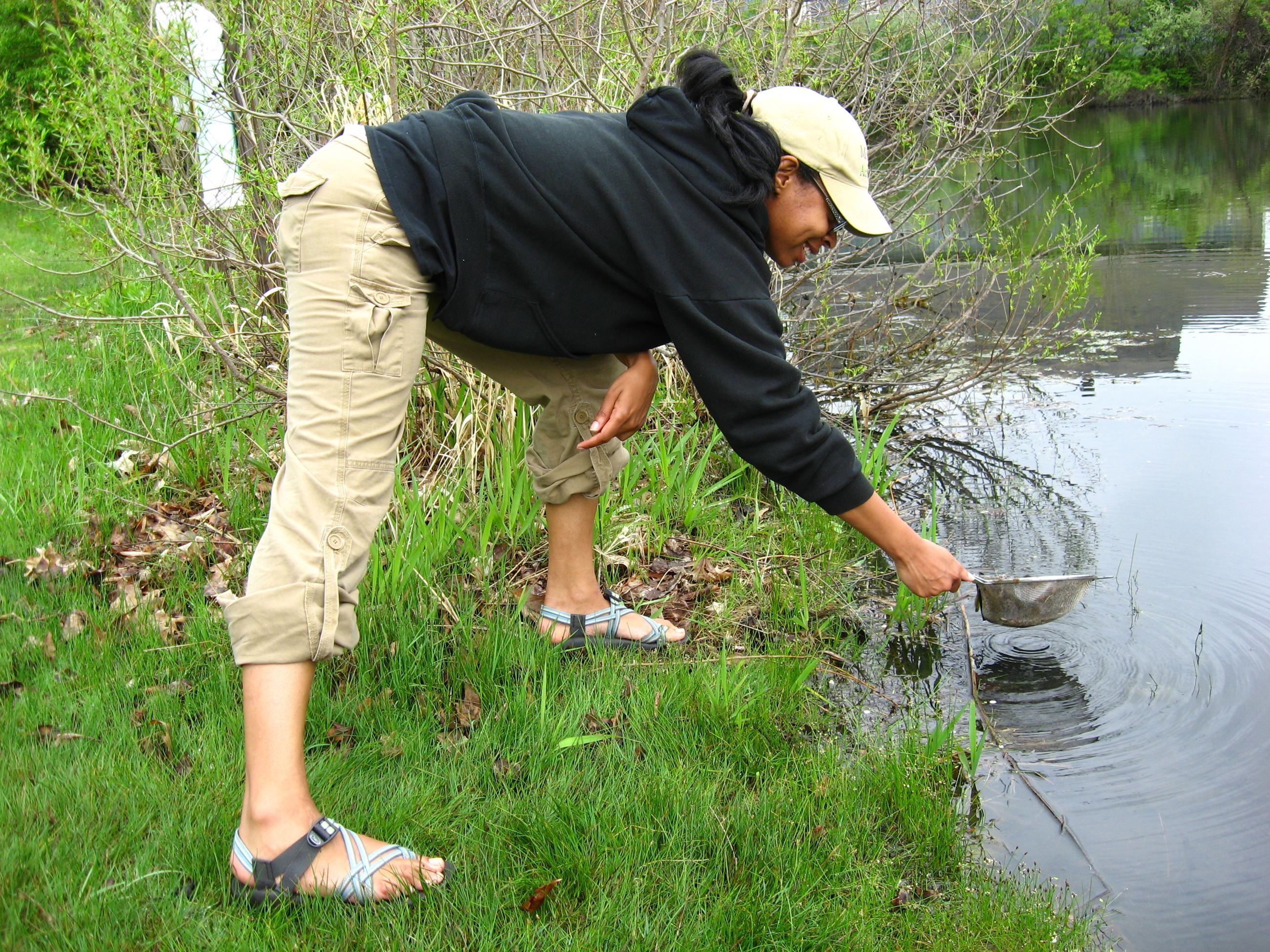 woman looks for aquatic insects